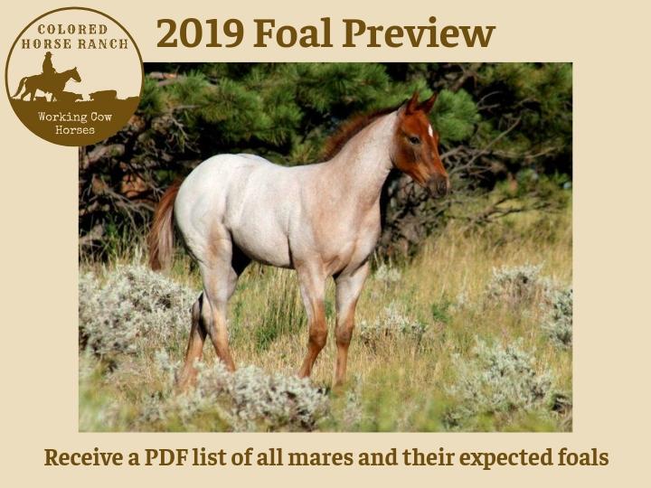 Horses for Sale - www coloredhorseranch com